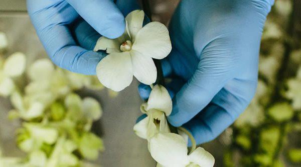 Flores para el cuidado de la piel