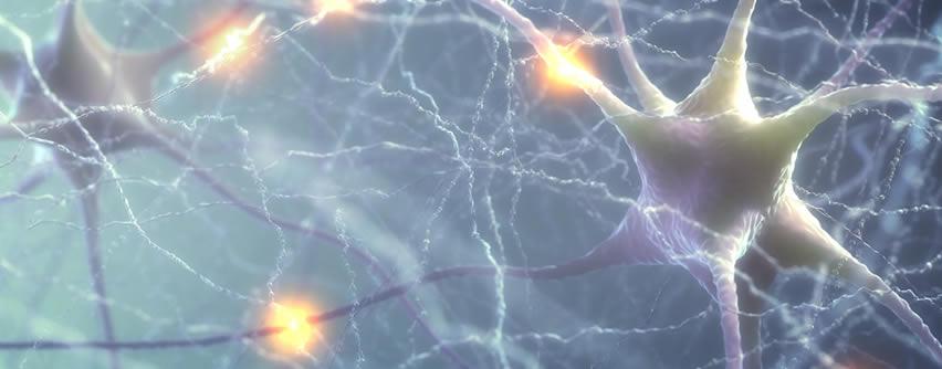 Surgen más pruebas de que existe neurogénesis hasta edades avanzadas