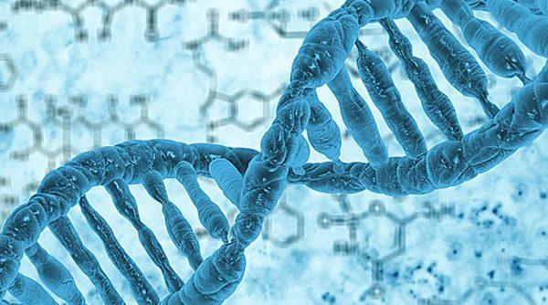 En qué consiste la Epigenética